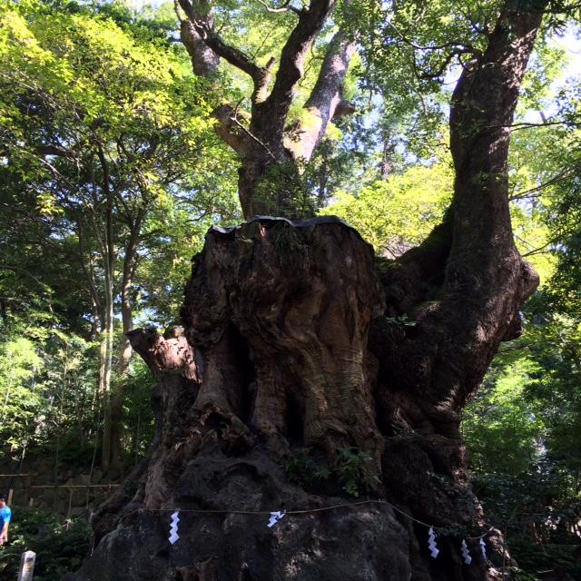 20151025来宮神社IMG_5151.JPG