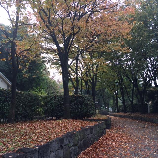 20151109紅葉IMG_5239.JPG