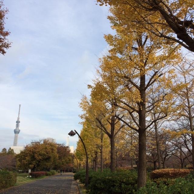 20151130紅葉IMG_5309.JPG