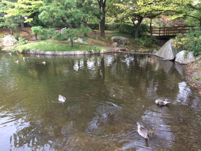 20161021猿江公園IMG_6695.JPG
