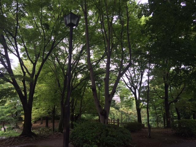 20170817猿江公園IMG_7821.JPG